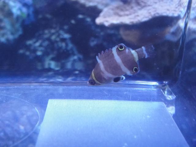 海水魚・サンゴ・水草・淡水魚_f0189122_13171627.jpg