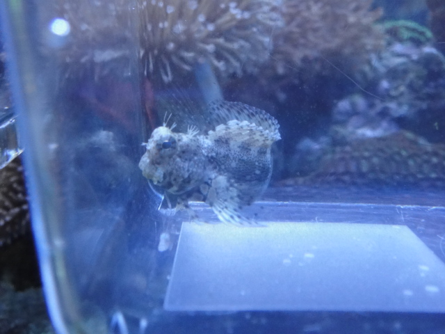 海水魚・サンゴ・水草・淡水魚_f0189122_13223757.jpg