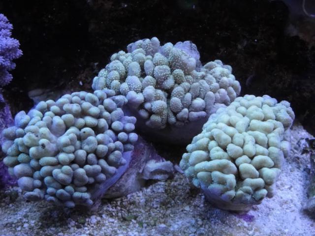 海水魚・サンゴ・水草・淡水魚_f0189122_13315926.jpg
