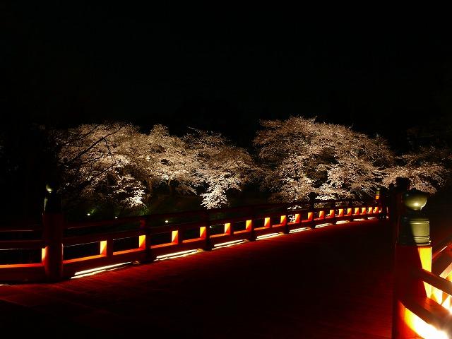 会津鶴ヶ城 夜桜_f0032130_2171718.jpg