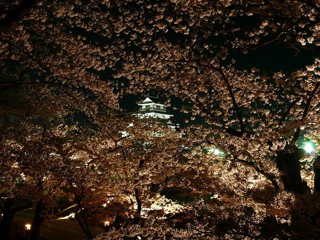 会津鶴ヶ城 夜桜_f0032130_2174811.jpg