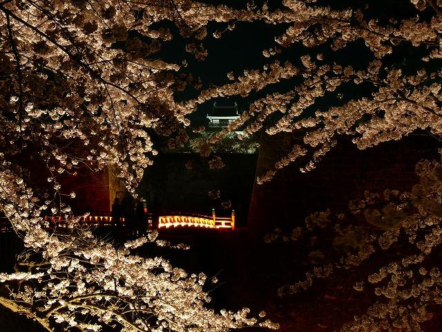 会津鶴ヶ城 夜桜_f0032130_217793.jpg