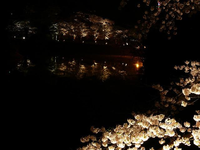 会津鶴ヶ城 夜桜_f0032130_2182092.jpg