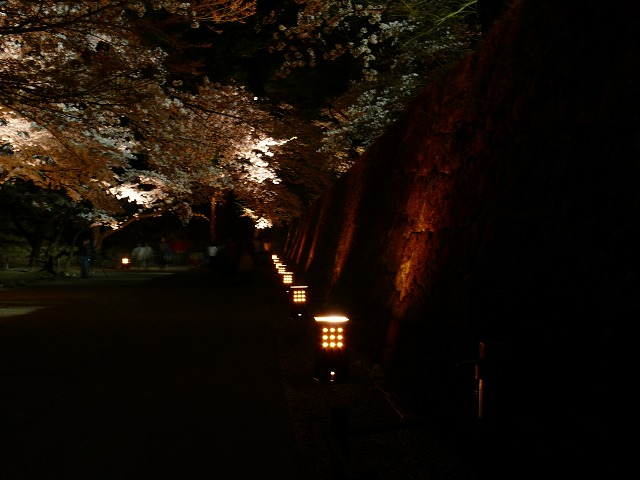会津鶴ヶ城 夜桜_f0032130_218589.jpg