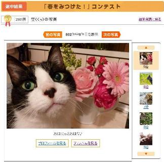 Yahoo!ペット「春をみつけた!」コンテスト優勝猫 ぽー空編。_a0143140_23382991.jpg