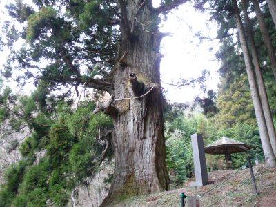 杉シュー太郎が歌う「矢立の杉」_f0019247_22565146.jpg