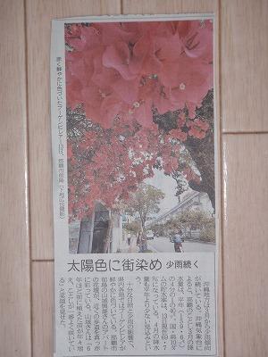 ブーゲンビレアの花盛り_c0180460_16333927.jpg