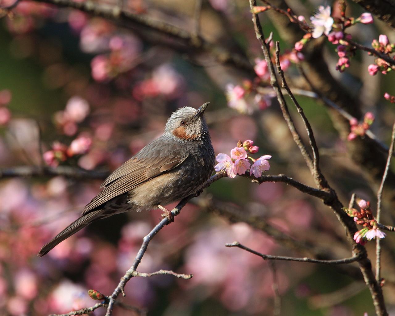 桜を追いかけて高原へ_f0105570_2241212.jpg