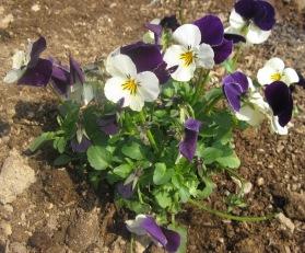 春なので!_e0142373_20374534.jpg