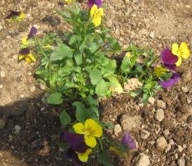 春なので!_e0142373_2038232.jpg
