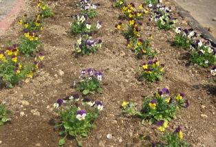春なので!_e0142373_20463144.jpg