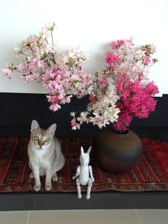 愛猫ディアモン君、つつじを愛でる_a0138976_192764.jpg