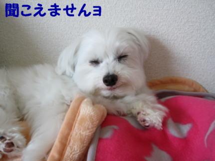 b0193480_2142652.jpg