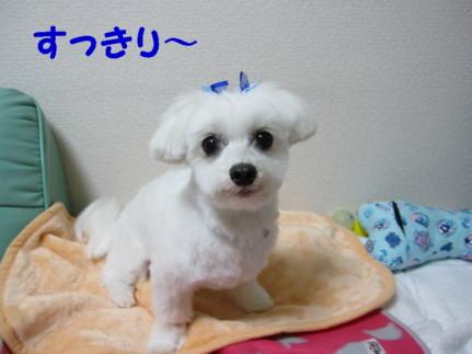 b0193480_2161932.jpg