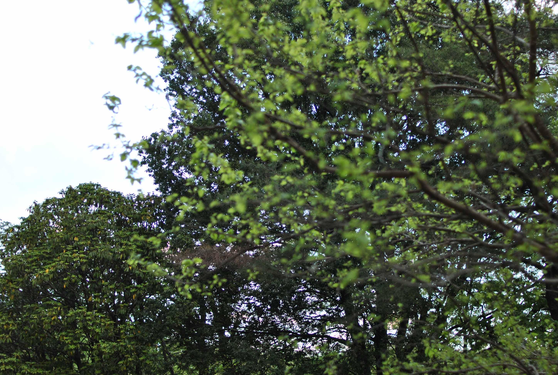 森の中の小さなドラマ_b0194880_11105184.jpg