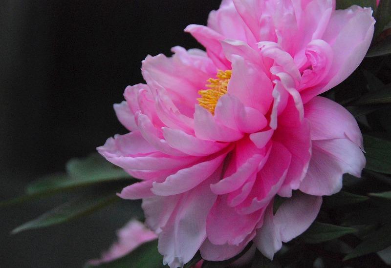 春の近所散策_c0187781_2345091.jpg