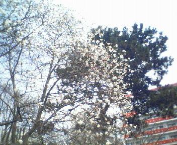 北大の早春_f0078286_1542438.jpg