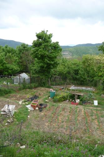 畑の野菜~4月の畑_f0106597_1733341.jpg