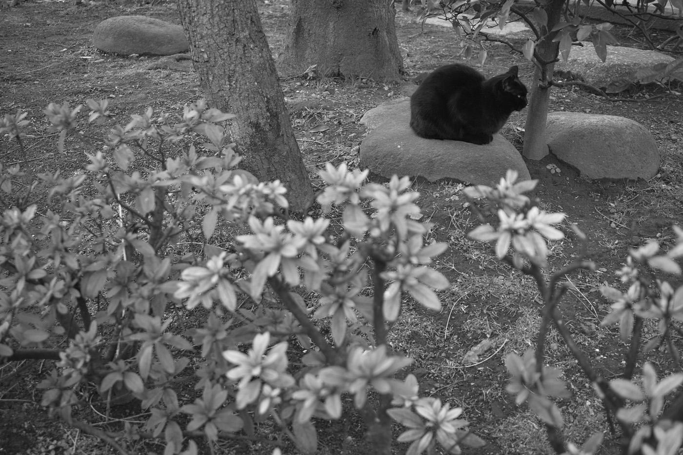 松が谷の猫。_c0120903_362522.jpg