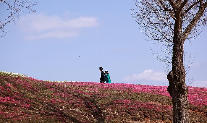 """""""春あざやか、夢の芝桜"""" NO.2_a0140608_955974.jpg"""