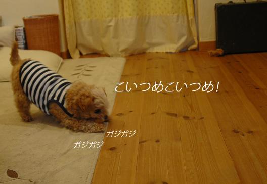 d0207515_16882.jpg