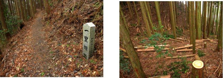 熊野古道編(12):石屑の坂道(10.3)_c0051620_615326.jpg