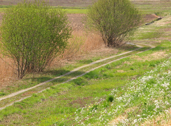春の野_e0169421_20591257.jpg