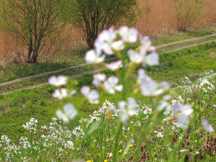 春の野_e0169421_205937100.jpg