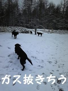f0148927_10263280.jpg