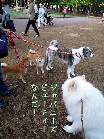 日曜おっきな公園続き_c0062832_4224366.jpg