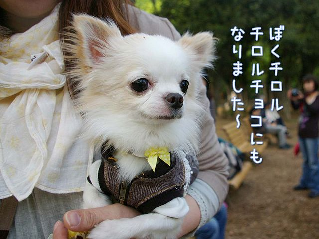 日曜おっきな公園続き_c0062832_4225026.jpg