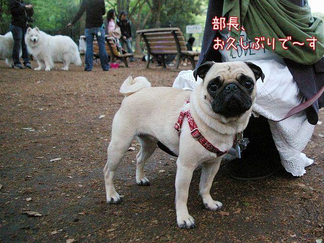 日曜おっきな公園続き_c0062832_4225554.jpg