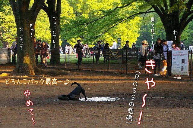 日曜おっきな公園続き_c0062832_4225938.jpg