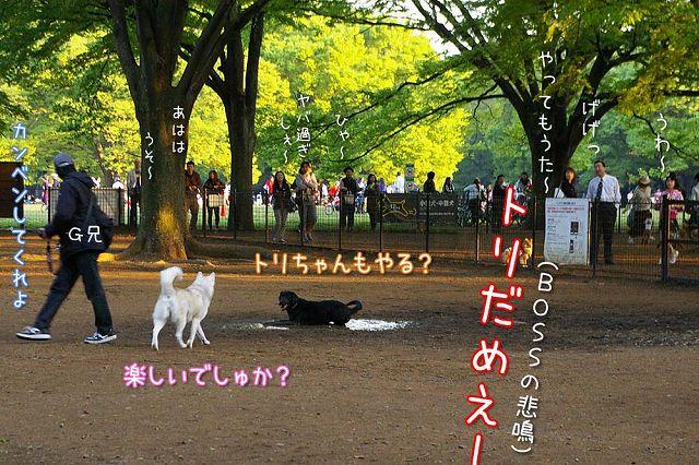日曜おっきな公園続き_c0062832_423670.jpg