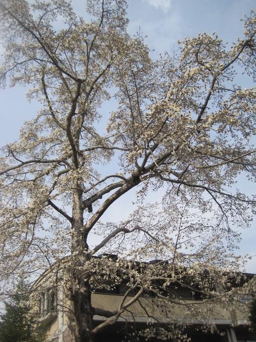お山の春_f0236260_27071.jpg