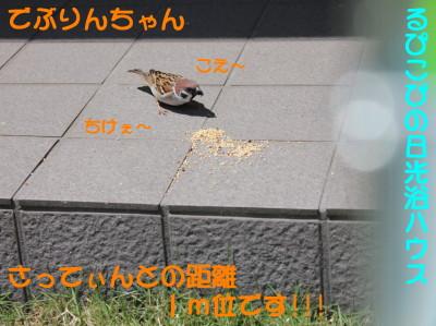 b0158061_20214599.jpg