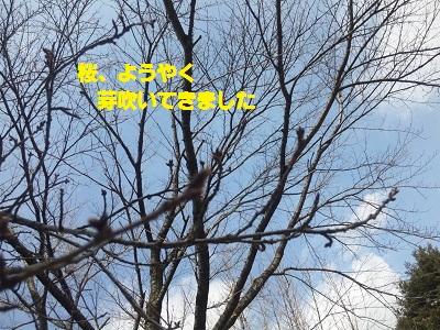 b0197865_1645581.jpg