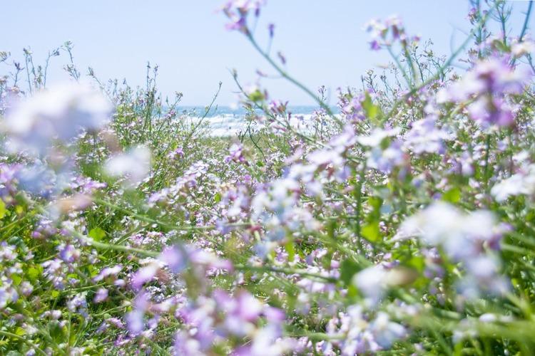 春の海・強風篇。_b0022268_2235743.jpg