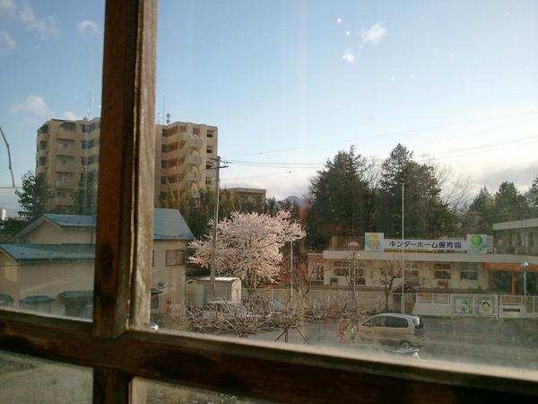 桜が見える_a0141072_2057228.jpg