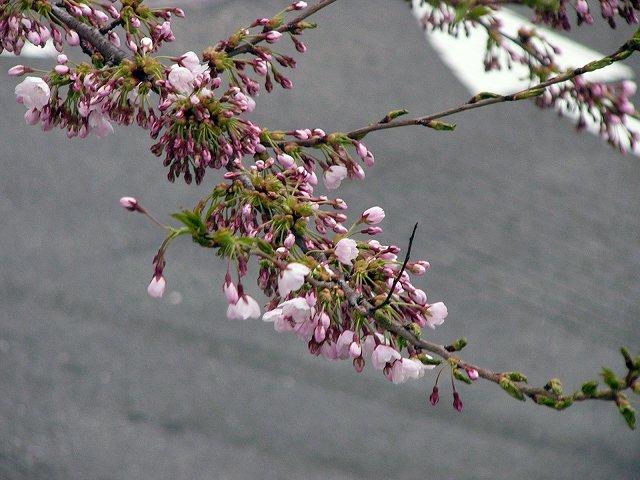 北海道の春_f0186373_16583712.jpg