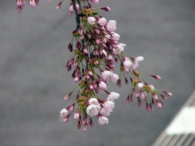 北海道の春_f0186373_16585035.jpg