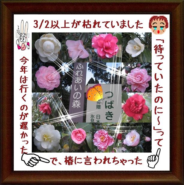 f0175279_92878.jpg