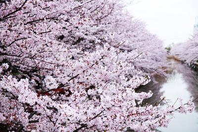 お花見食事会で(みずぬま避難所)_d0081884_1685845.jpg