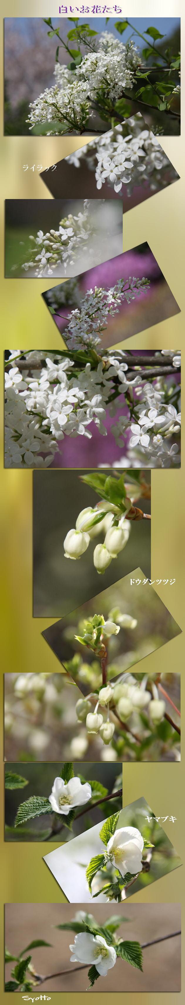 f0164592_9473691.jpg
