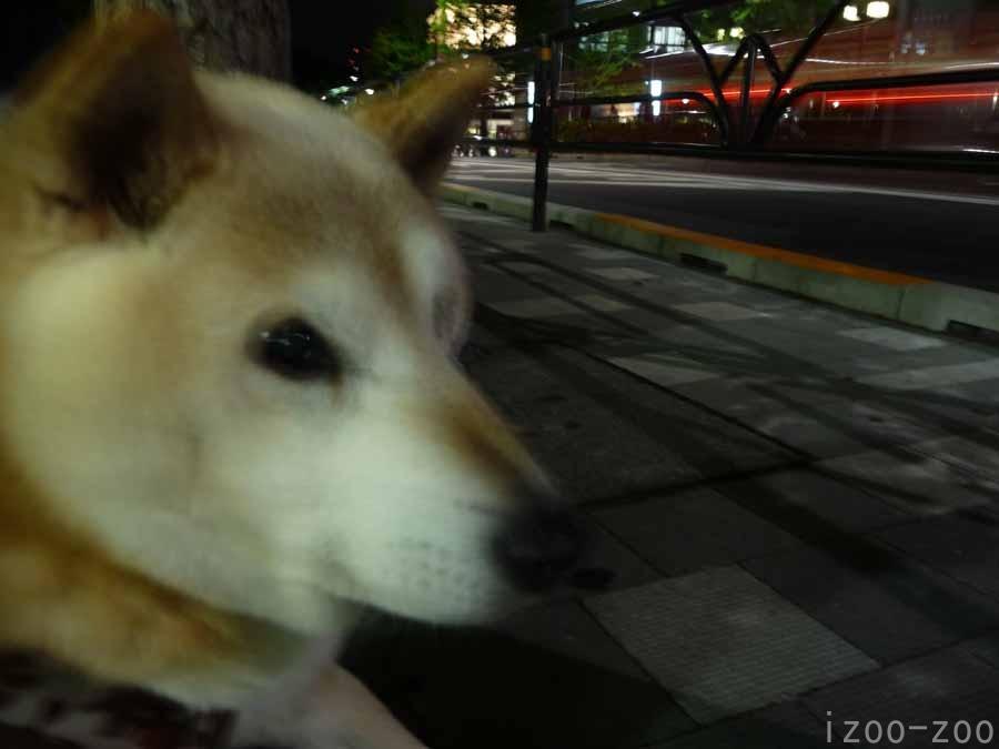 夜遊び_c0223095_23103911.jpg
