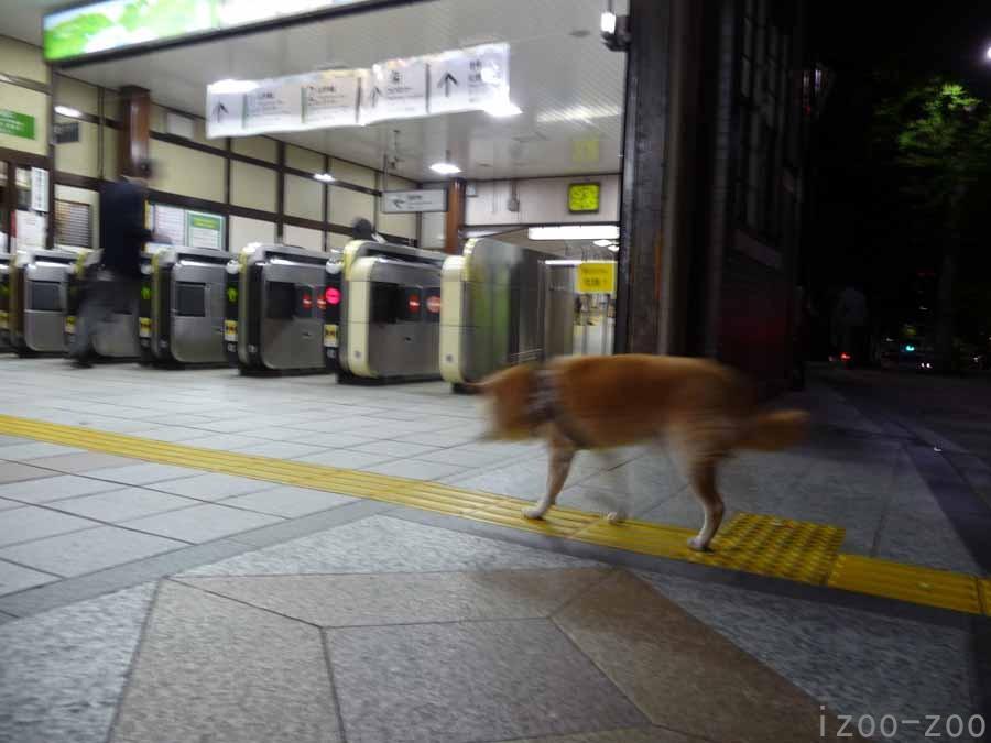 夜遊び_c0223095_2314835.jpg