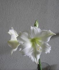 花が咲いた_e0055098_20511331.jpg