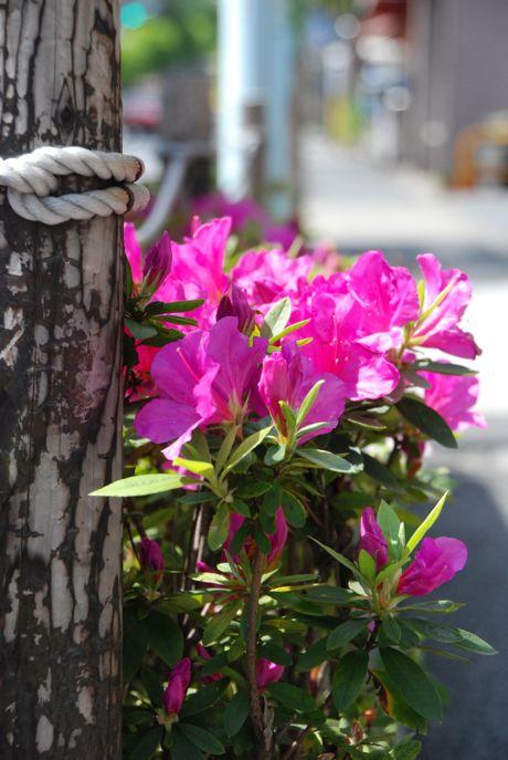 良い花、あります_a0037910_10361895.jpg