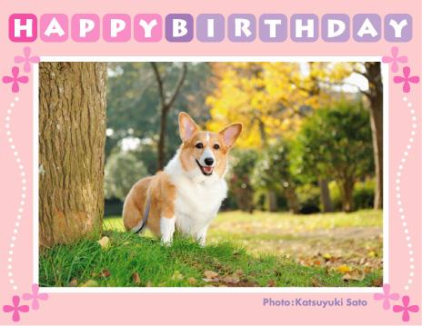 BEANくん、あさひちゃん、ピーナちゃん、ちょびくん、お誕生日おめでとう♪_d0102523_1315076.jpg