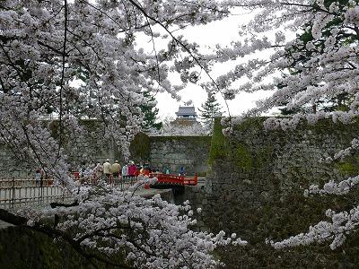 桜満開の鶴ヶ城_f0032130_1738302.jpg